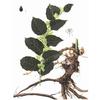 供应白藜芦醇