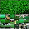 青岛人造草坪门球场|供应青岛景观草皮|仿真草皮|景观草皮价格