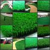 供应青岛人造草坪球场|人造草坪厂|人造草坪施工|跑道人造草|仿真