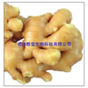供应生姜提取物 Ginger Root P.E.
