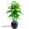 供应仿真植物 仿真植物报价 仿真植物厂家 仿真树 仿真椰子树