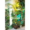 供应仿真植物 仿真植物厂家 仿真植物报价 仿真海藻树 仿真棕榈树