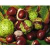 惠瑞生物/供应/纯天然/娑罗子提取物20%/娑罗子七叶皂甙/娑罗子种子提取物/专业生产厂家