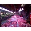 供应鲜肉灯管、鲜肉展示灯管,冷鲜肉展示柜专用灯管,冷冻柜展示灯管