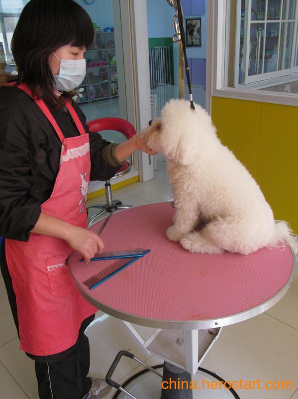 【咪诺宠物】烟台宠物医院 烟台宠物美容 烟台宠物剪指甲feflaewafe