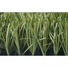 供应广州人造草,人造草坪,50mm挤出带筋单丝草,绿城足球人造草