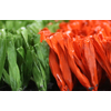 供应25双色各半网状,广州绿城人造草坪,适用于网球场,篮球场的人造草产品