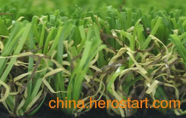 供应40L59Y33G2-C(四色草),广州绿城人造草坪,休闲装饰、公园绿化用人造草坪