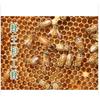 宜宾蜂之缘天然花粉 纯天然花粉