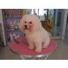 【烟台宠物服装】烟台宠物玩具 烟台宠物饰物 烟台宠物磨牙棒feflaewafe
