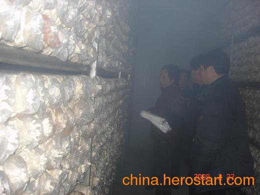 供应食用菌加湿、蘑菇房喷雾加湿、种植大棚加湿