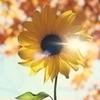 供应花粉·砂土附着防止剂