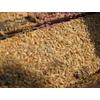 广州白蚁防治网  白蚁的种类