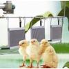 供应养鸡专用锅炉 养殖专用锅炉优质养殖专用锅炉