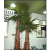 供应仿真棕榈树 仿真棕榈树批发 仿真棕榈树厂家
