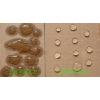 珠海澳达化工大量供应抗酸纸张泼水剂性能好
