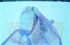 供应,印花丝巾,礼仪公关领带丝巾,空姐丝巾,小方丝巾,小丝巾批发