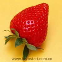 大量供应新鲜草莓全明星