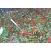 北京市养鱼最先进技术,最科学鱼池水净化水处理循环系统及设备feflaewafe