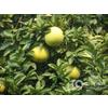 供应柚皮甙提取物