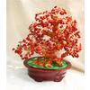 供應珊瑚財寶樹