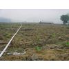 供应石家庄微喷带生产厂家,微喷带可否用于温室滴灌