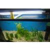 供应生态茶几壁挂玻璃水族箱鱼缸专用T5T8T9水族灯管