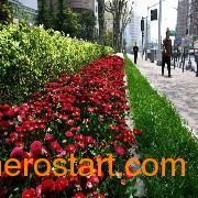 青岛花卉景观|青岛花墙|青岛花箱|青岛美田园景立体花坛feflaewafe