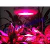 供应专业LED植物补光灯厂家