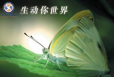 供应河南优秀城市形象片/宣传片制作公司