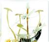 玉石雕刻工艺品 婚庆礼品 鸳鸯戏水 家装饰品办公摆件商务礼