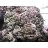 供应云南省普洱市特有树种 羊屎果  原料