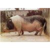 供应增收菌益多(育肥猪专用菌)