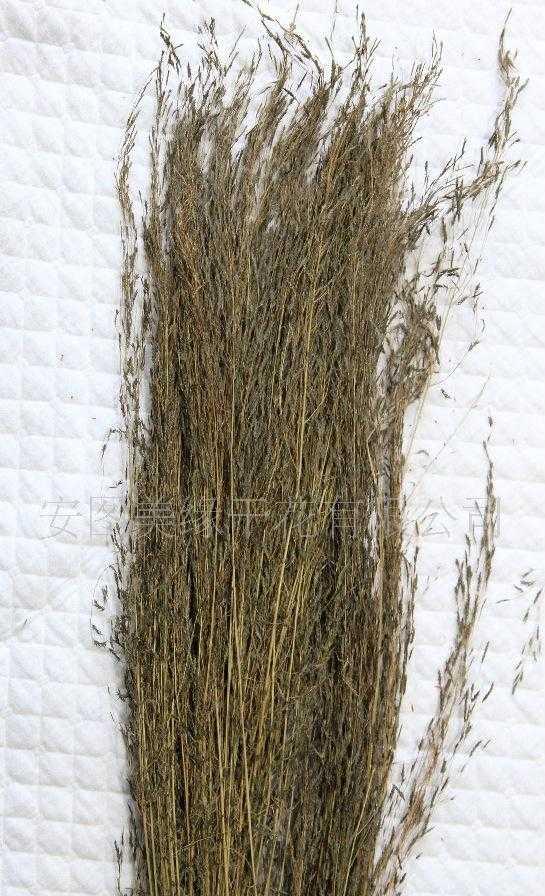干花-蚊子草-我厂具有进出口经营的资质企业
