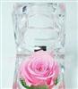 2012热销新特奇产品保鲜玫瑰花戒指盒/节日礼品/生日饰品