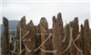 供应园林石,点缀石,石笋石,龙骨石,竹林笋石