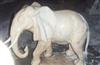 曲阳供应大象 石雕大象 晚霞红大象 汉白玉石雕大象 大象工艺品