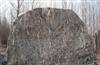 供应各种天然景观石,自然石,风景石,园林石。