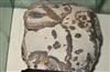 奇石贵州青 鹿回头 木制工艺品 根雕根艺茶桌批发零售