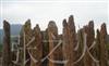 供应点缀石、盆景、石笋石、假山石,风景石,园林石