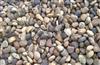 【低价批发】供应雨花石、五彩石、园林石、天然水洗石 欢迎订购
