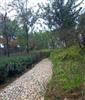 大量供应漂亮园林石