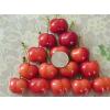 供应大樱桃树苗的施肥期