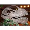 供应仿真恐龙骨架、化石工厂 恐龙头骨制作