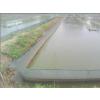 供应泥鳅的市场前景 泥鳅的价格 泥鳅养殖技术