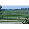 安徽水蛭养殖场供应水蛭种苗