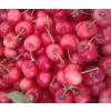 供应:大粒樱桃,红灯,早大果,黄密,沙密特